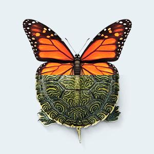 Newsletter Anmeldung Schmetterling+Schildkroete